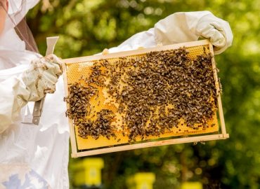 Ako rýchlo a účinne pomôcť prírode? Adoptujte si úľ